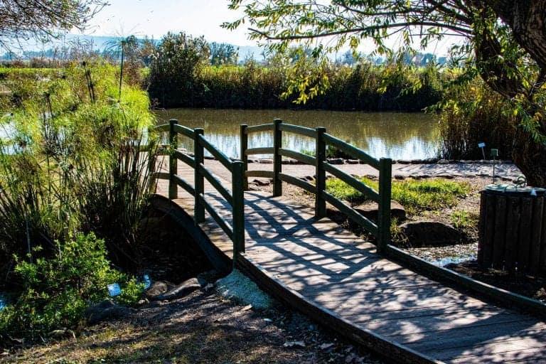 הגשר באגמון החולה