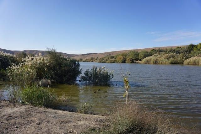 אגם המים בירוחם