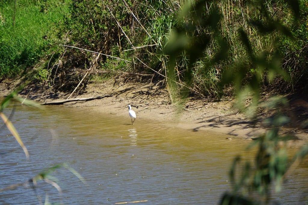 עוף מים בשפך של נחל שורק
