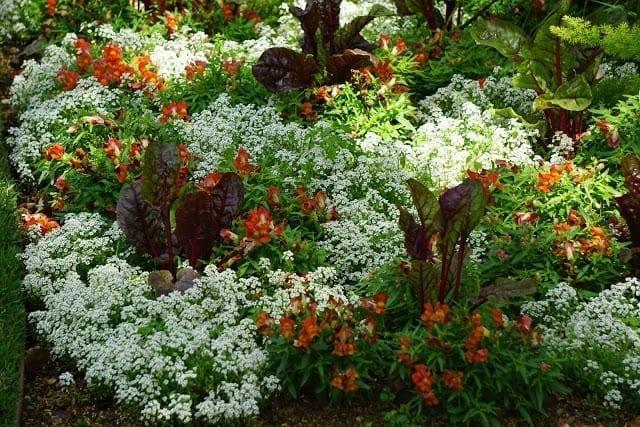 יופי של פרחים