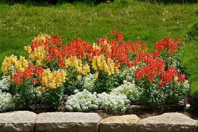 פרחים בגני הנדיב