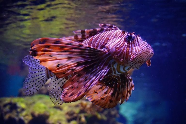 דג מרהיב עין באקווריום ישראל