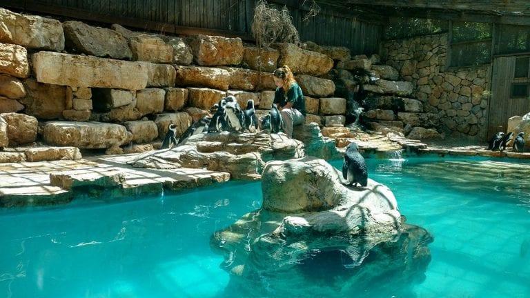 גן החיות התנכי בירושלים