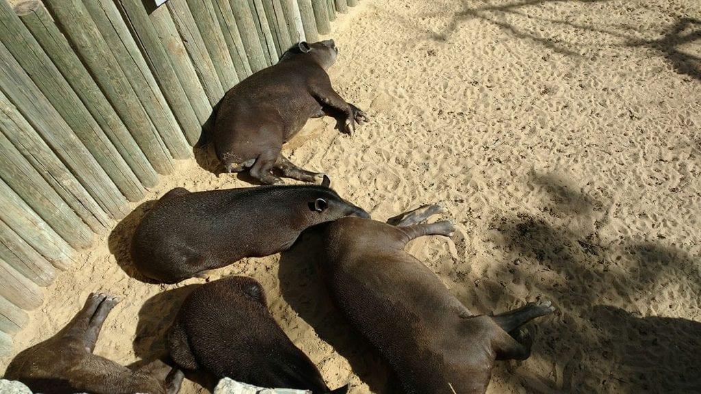 קפירות בגן החיות התנכי