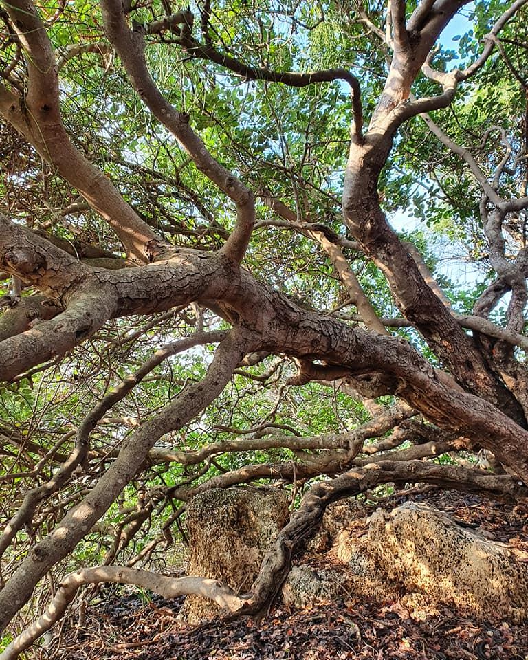 עץ בביתן אהרון