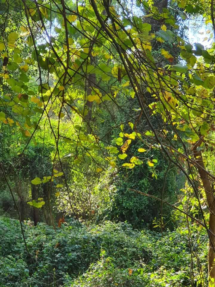 יער הקיבוצים - נחל גחר