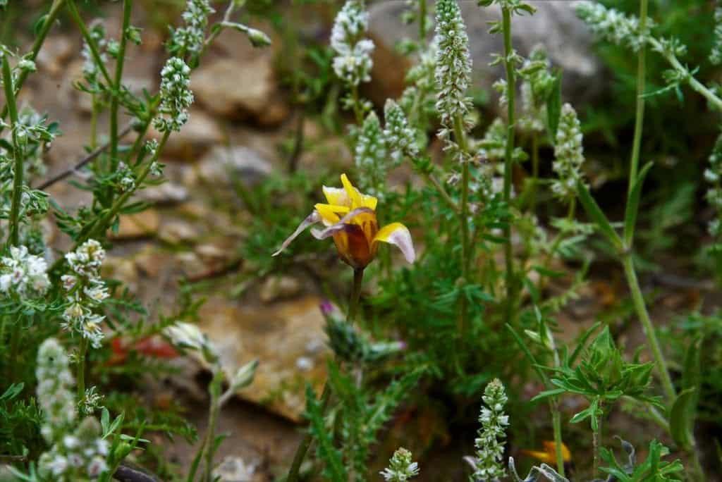 פרח הצבעוני בבורות לוץ