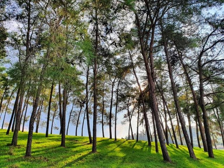 יער הרקפות